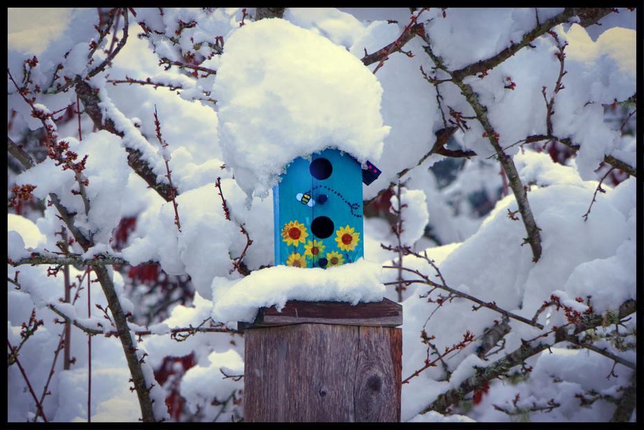 Arthur's Bird House