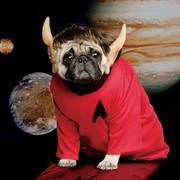 PLEASE HELP! Pug Fan of Spock Wants Paw Surgery to Be Able to Make Vulcan Hand Salute...Can You Help Light Workers?!