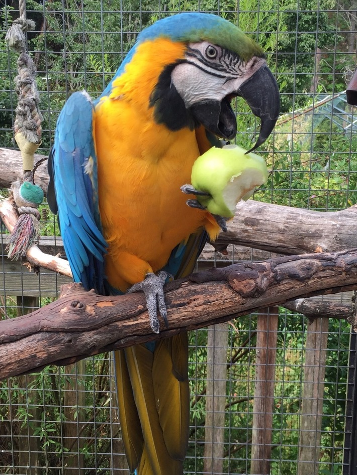 Janet's Pet Macaw