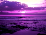 Purple Sunset