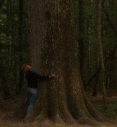Journée pour nos amis les arbres le 24 septembre 2011