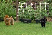 Backyard Duties 015