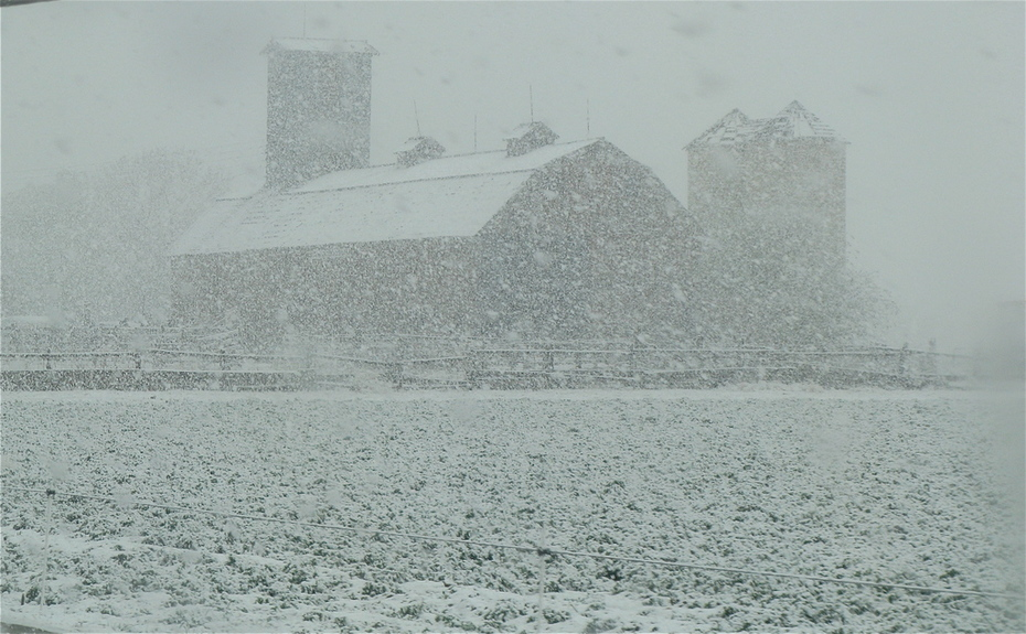 Niwot Barn in May Day snow Storm