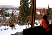 Watching Moose