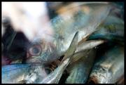 pescados 2