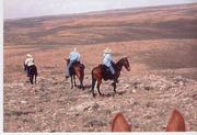 mules out west