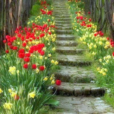 flores.bmp.jpg