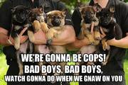 We're Gonna Be Cops