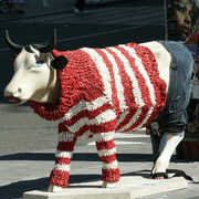 Sweater Cows!