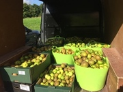Apples from Fryent