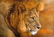 Mi leon cazando