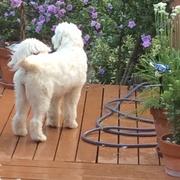 Jewel in the backyard
