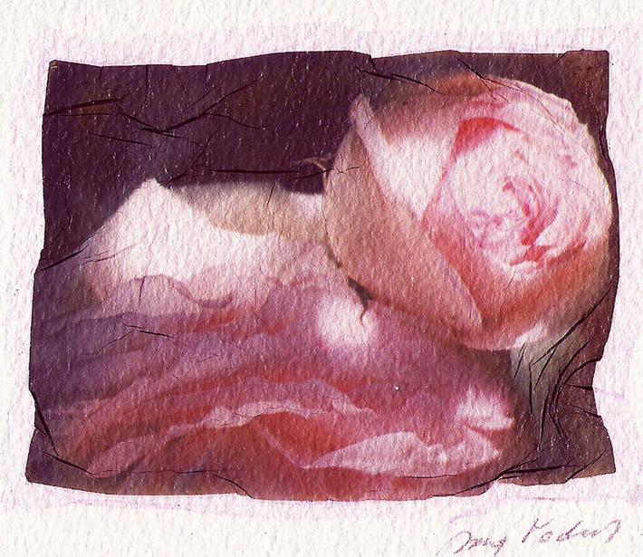 Rose rosse per te...