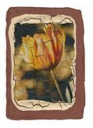 ...il giallo tulipano...