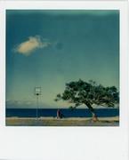 dialogo tra un albero una lampada e una nuvola