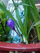 Spring the Image'narium Playdate