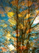 Reflected autumn trees