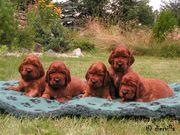 Diervilla Puppies 2007