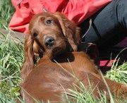 Puppy 4 months old
