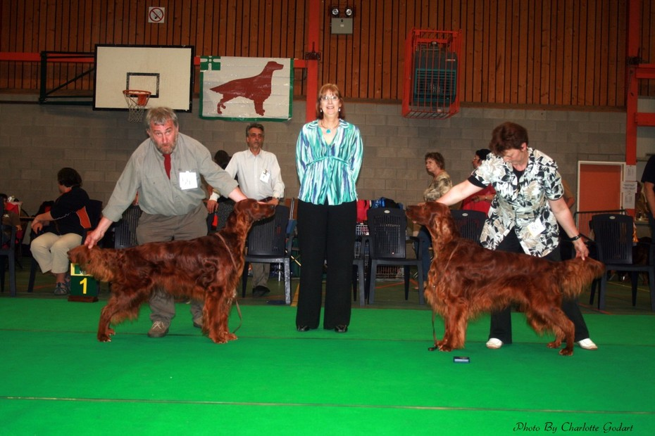 Lordly Bronan Res. best dog (L) - Queenstone The Jee Jee Man best dog (R) ISC Belgium 2008