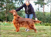 Copper´s Is Prinsessan  The winner of Open Bitch Class 2 /Ck and finally Best bitch 2  Winning the CC/Premium.