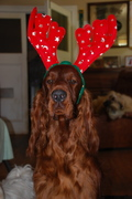 getting ready for Christmas