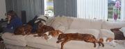 2-onze honden 005