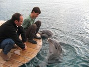 Eilat dolphin experiments with overtones 2004/2005