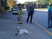 Fire Dog hard at work