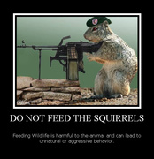 Do not feed the squirrels