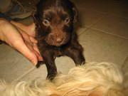 rachael's pics of puppies 017