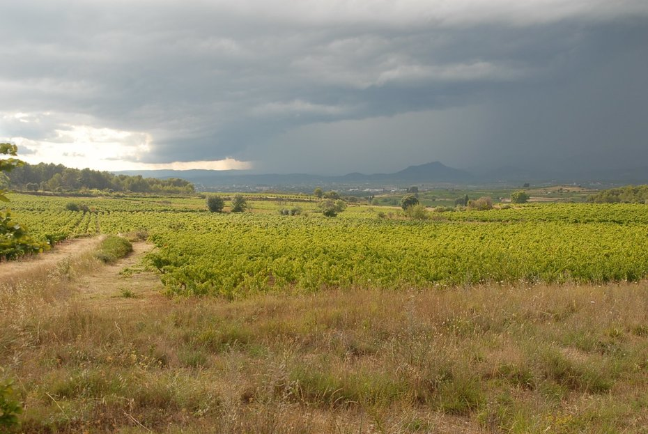 Landschap met wijngaarden omgeving Gignac Languedoc foto Ben Kruijsen