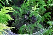 Als een spin in zijn web, zo voelen wij ons hier in Frankrijk