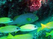 02-underwater