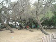 Bosque em Tel Aviv
