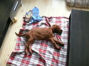 sleeping little monster