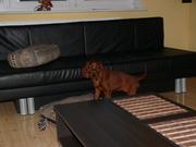 Lexie at home