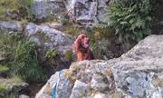 Bronte in rocks