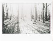 mattino nel bosco