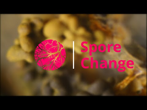 Spore Change | Physarum Polycephalum