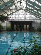 Stanford-Inn-Rainforest-Pool-Room