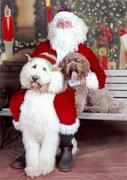 MS Christmas2012