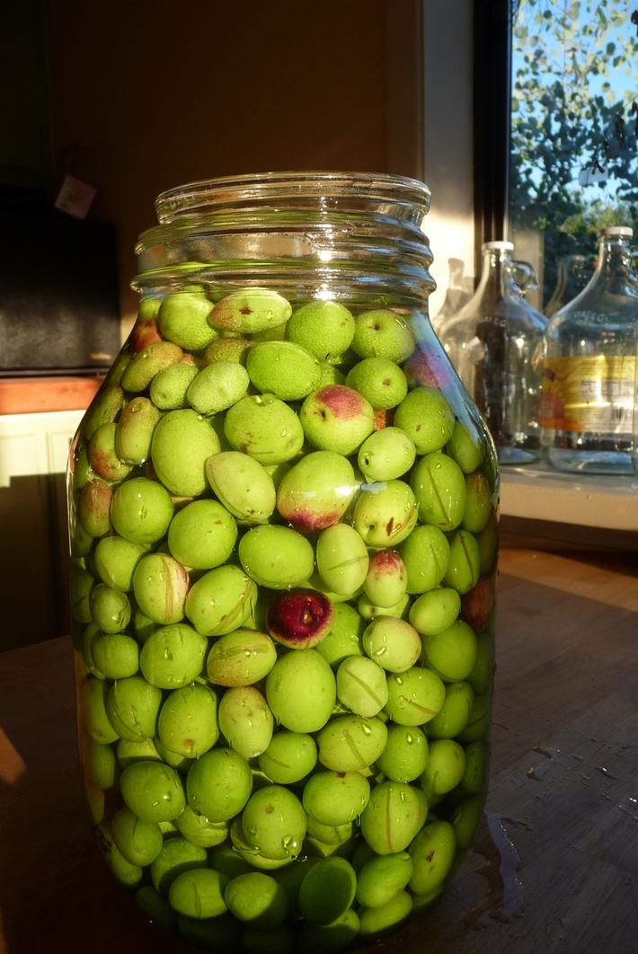 olive stuffs 072