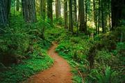 Asuntos Forestales