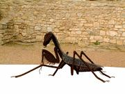 insects in art