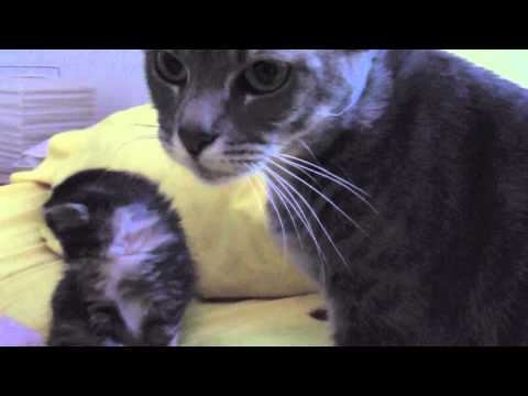 Kittens at 5 Weeks: So Cute!