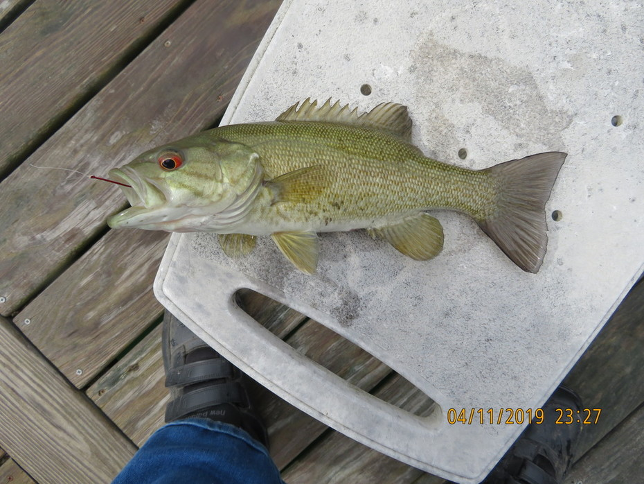 tabbert pond 4/13/19