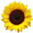 JSunflower1217