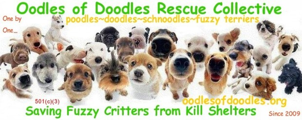 Oodles of Doodles Rescue Collective