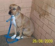 para adoção urgente está no zoonoses tratar c.. sueli (13) 3019-3551